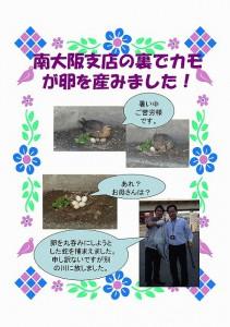 南大阪支店の裏でカモが